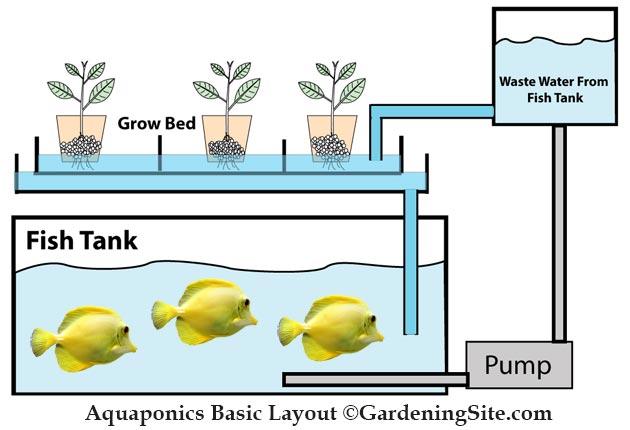 aquaponics-diagram